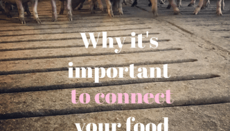 Why it's Important to Connect Your Food to the Farm