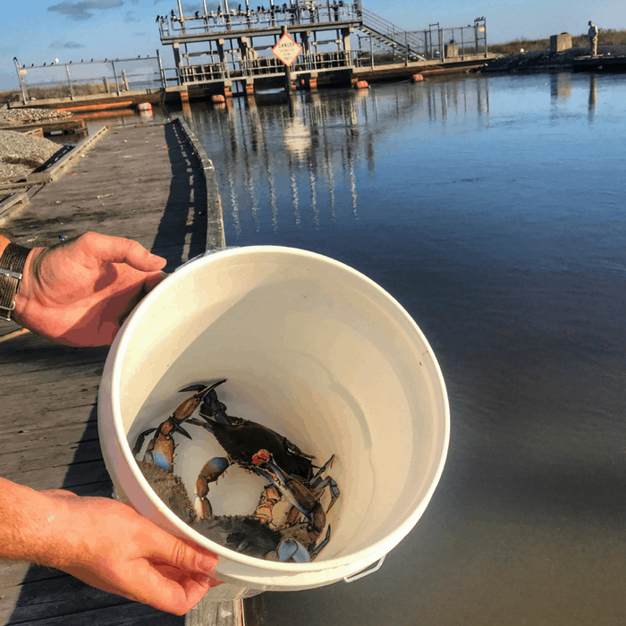 Crabbing Along the Creole Nature Trail