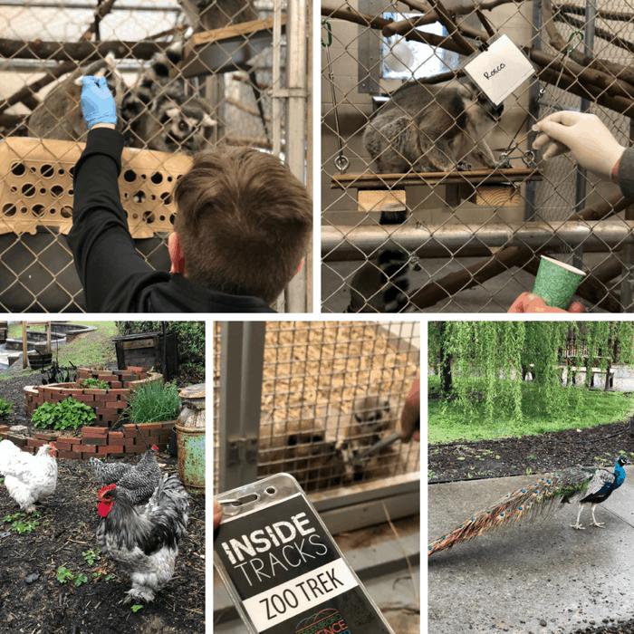 Behind the Scenes at Inside Tracks: Zoo Trek Greensboro NC