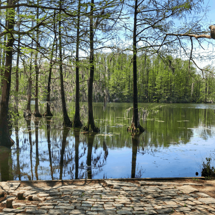 Greenfield Lake Park in Wilmington, North Carolina