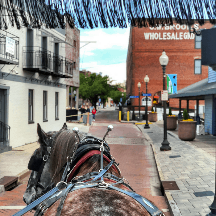 Horse-Drawn-Carriage Tour in downtown Wilmington, North Carolina