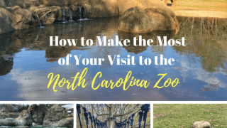 How to Make the Most of Your Visit to the North Carolina Zoo
