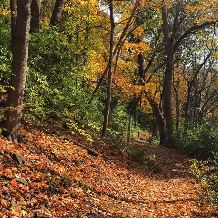 hiking trail in the fall