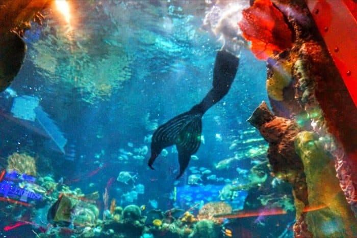 las-vegas-vaccation-aquarium