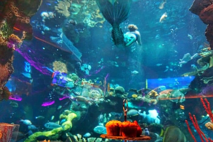 meals with a mermaid Las Vegas
