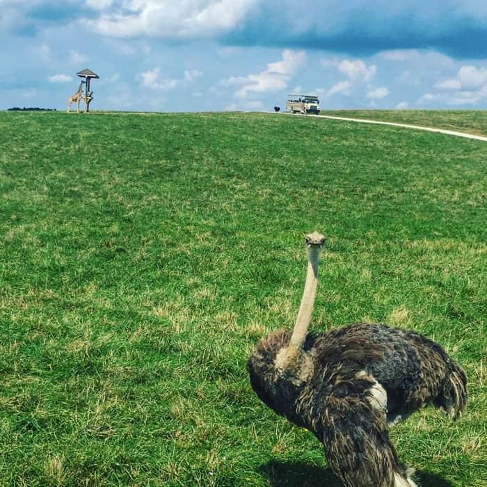 wilds-animal-safari-cumberland-ohio