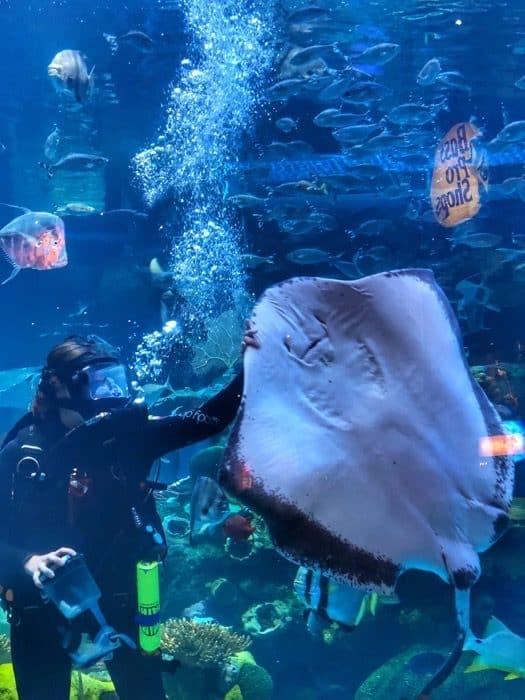 aquarium-silverton-casino-las-vegas