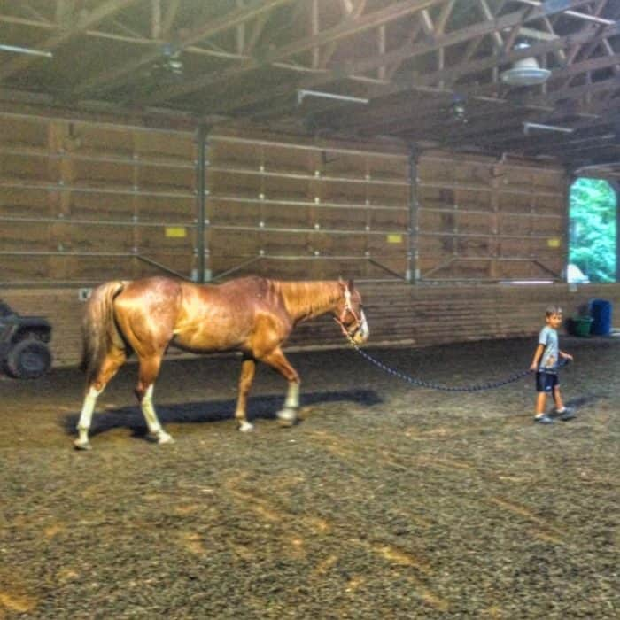 equine-assisted-development-grand-rapids-michigan-adventure-mom-blog