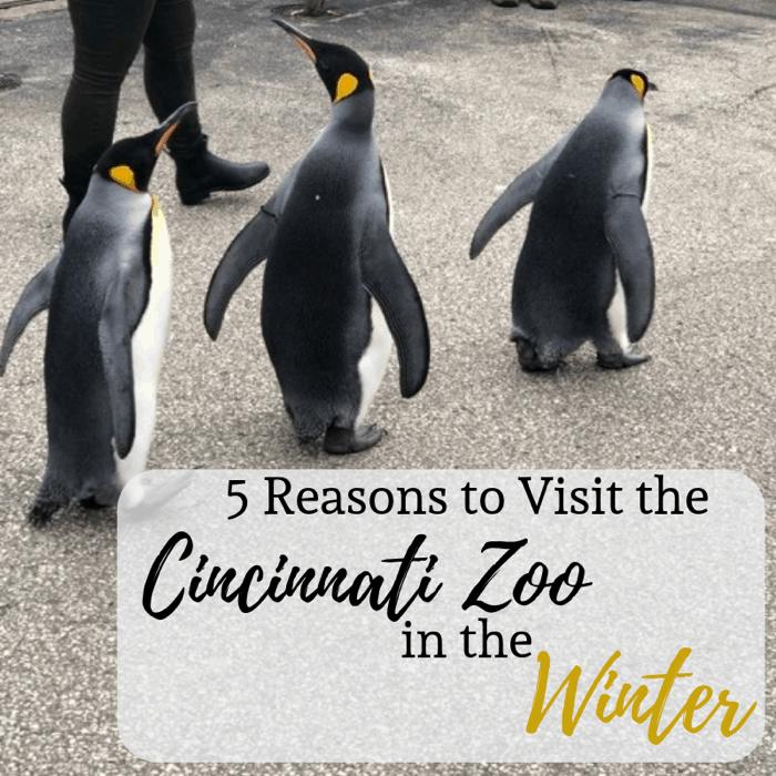 5 Reasons to Visit the Cincinnati Zoo in the Winter