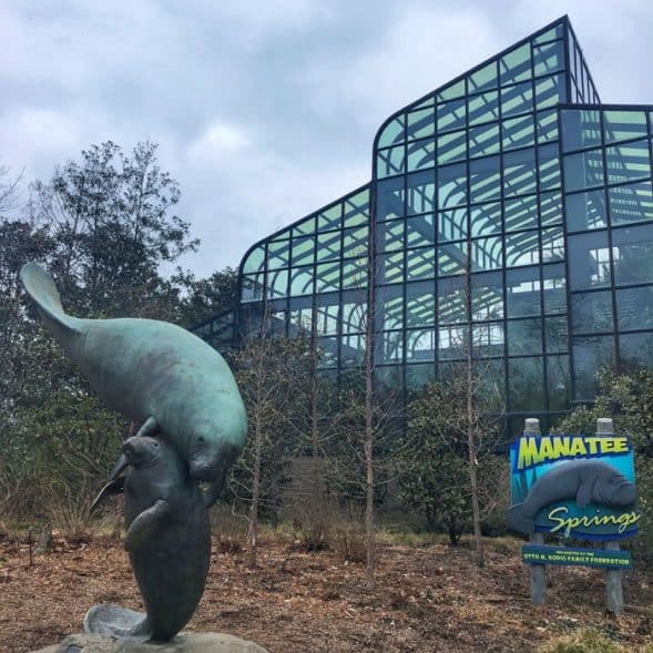 manatee springs at the Cincinnati Zoo