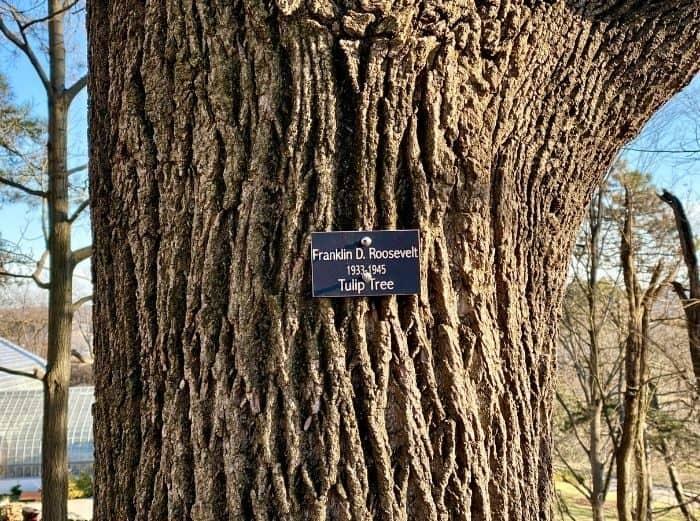 tree honoring Franklin D. Roosevelt in the Presidential Grove in Eden Park Cincinnati