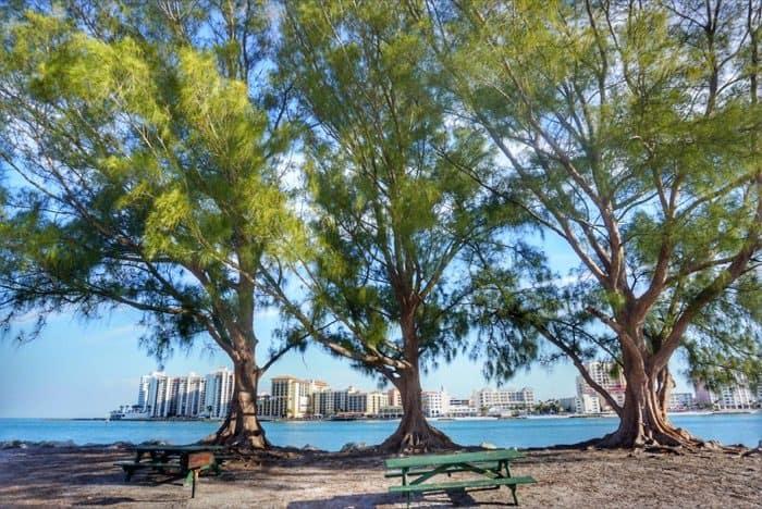3 trees at Sand Key Park