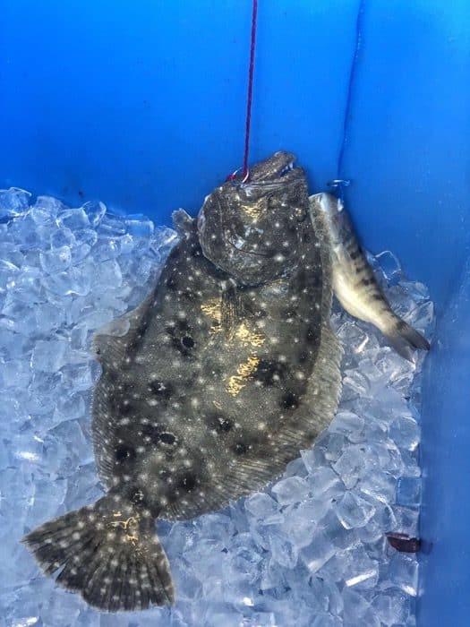 fish caught deep sea fishing Florida