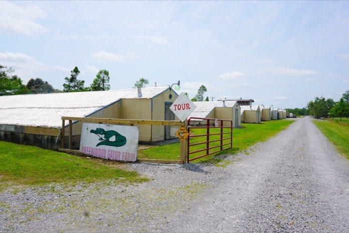 tour at Greenwood Gator Farm