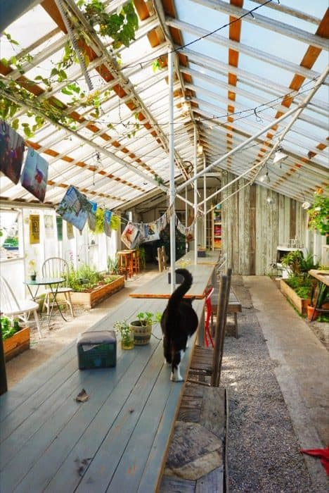 Marigold the Cat is the official mascot of The Greenhouse on Porter in Ocean Springs, MS