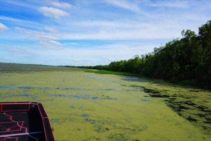 looking or gator tracks on an Airboat tour with RJ Molinere of History Channel's Swamp People