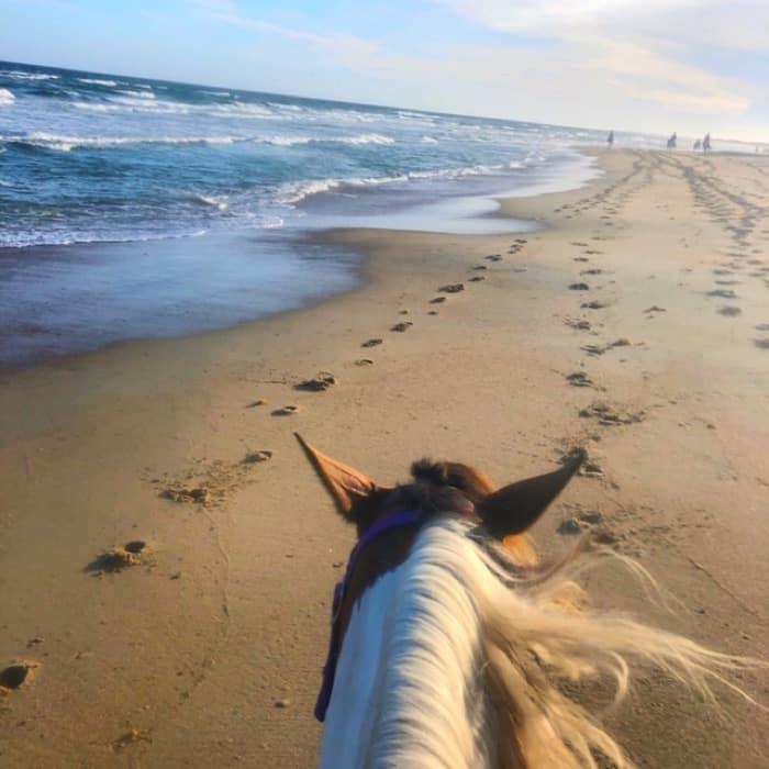 horse back riding on the beach ride Equine Adventures Horseback Tour