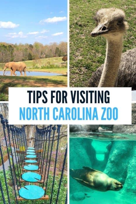 Tips for Visiting North Carolina Zoo