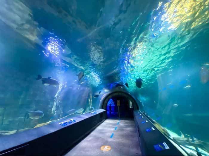 shark tunnel at Newport Aquarium