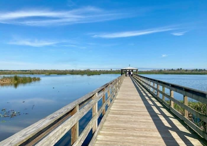 Bird Spotting at Cattail Marsh Scenic Wetlands and Boardwalk