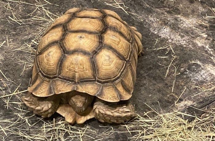 tortoise at Gator Country Wildlife Adventure Park