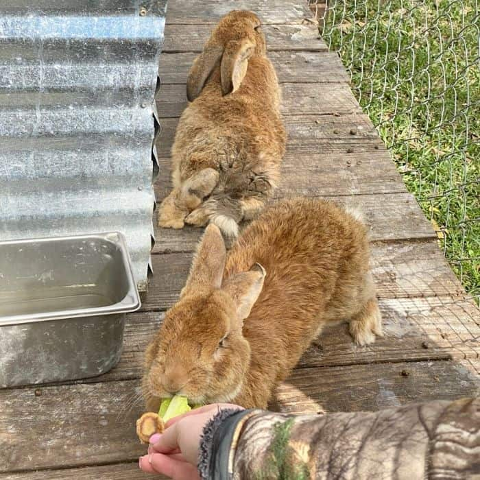bunnies at Gator Country Wildlife Adventure Park