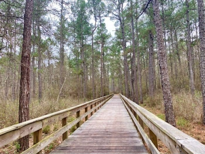 hike at Big Thicket National Preserve