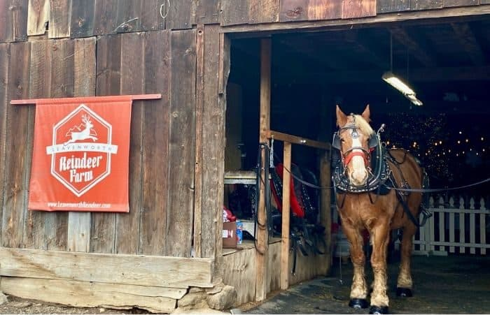 horse at Leavenworth Reindeer Farm