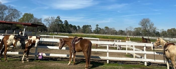 horseback riding at Tyrell Park in Beaumont Texas