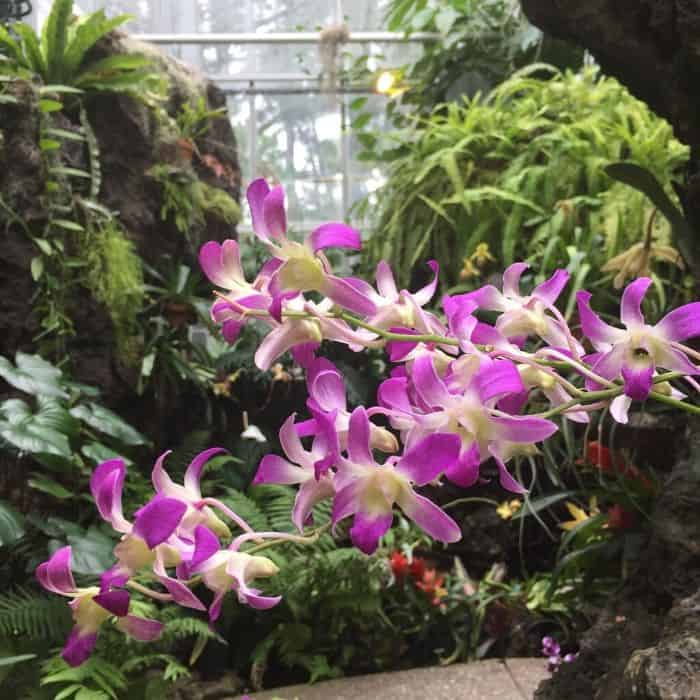 flowers inside Krohn Conservatory in Cincinnati
