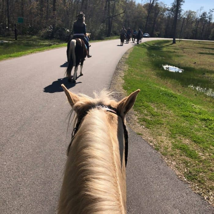 horseback riding at Tyrell Park Stables in Beaumont Texas