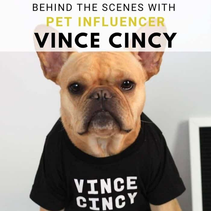 Behind the Scenes With French Bulldog Pet Influencer Vince Cincy