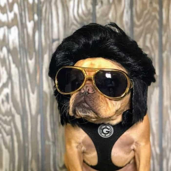 Vince Cincy in Elvis wig