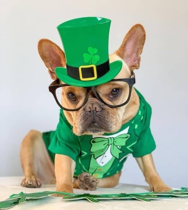 Vince Cincy in St Patricks Day costume