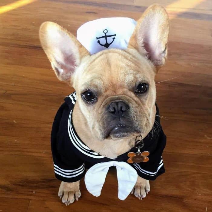 Vince Cincy in a sailor suit costume