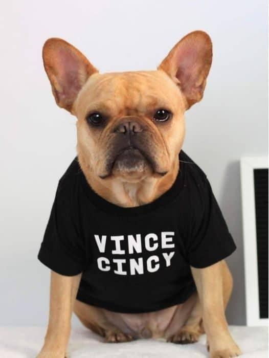 Vince Cincy pet influencer