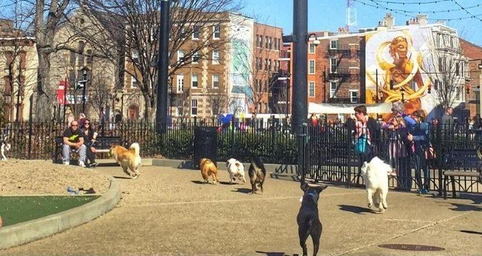 dog park at Washington Park in Cincinnati Ohio
