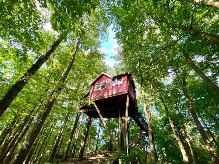 view from below the Little Red Treehouse at the Mohicans