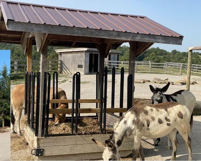 animals at Ararat Ridge Zoo