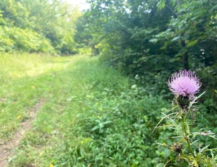 hiking trail at Hidden Lake Farm in Kentucky