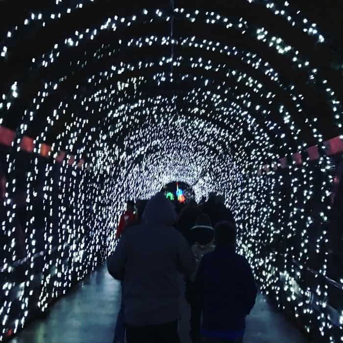 Festival of Lights at the Cincinnati Zoo