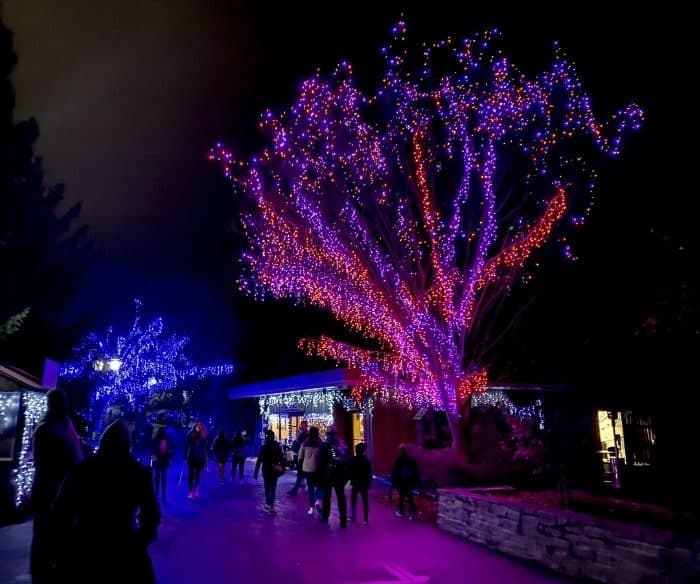 colorful lights at Festival of Lights at the Cincinnati Zoo
