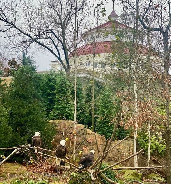eagles at the Cincinnati Zoo