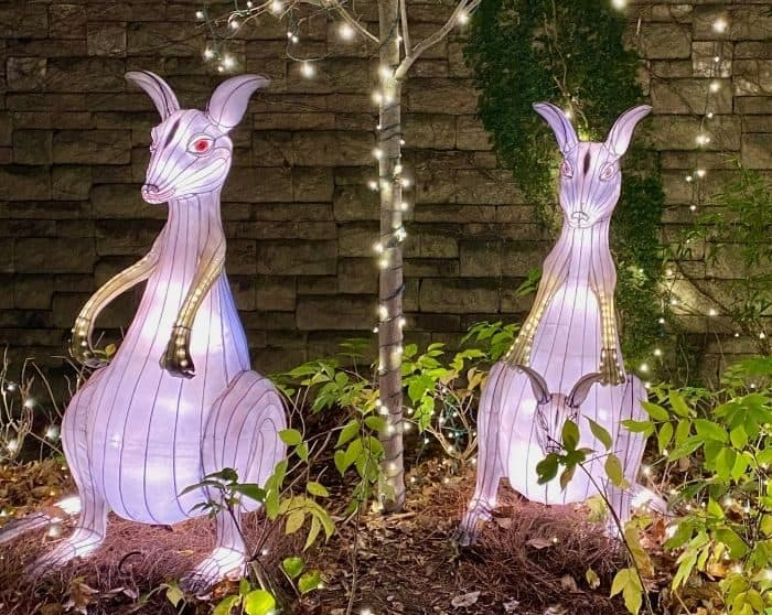 kangaroo lanterns at Festival of Lights at the Cincinnati Zoo