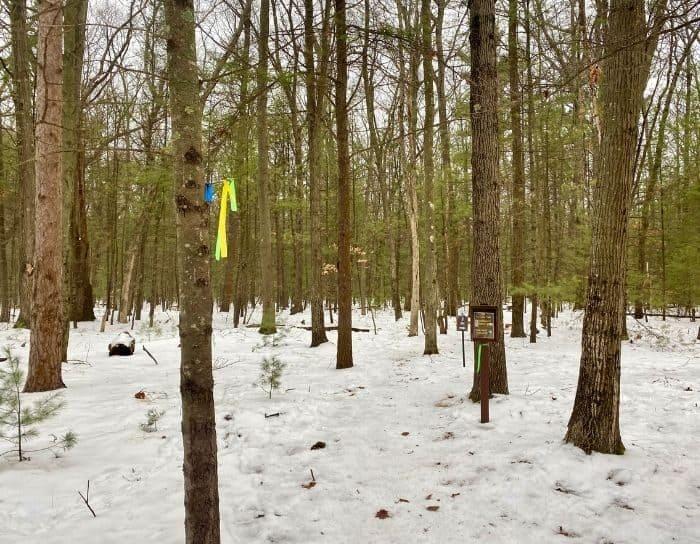 yellow ribbon marking the Lake Michigan Loop Trail