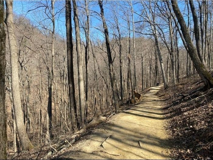 hiking trail at The Pinnacles in Kentucky