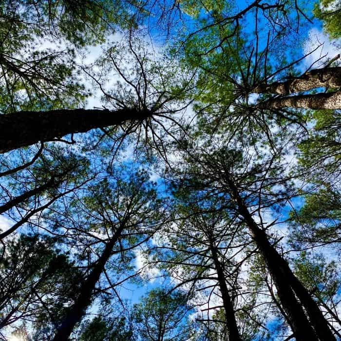 trees GoFar USA Park