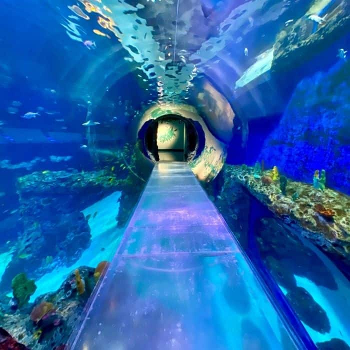 Reasons to Visit the Mississippi Aquarium in Gulfport, MS