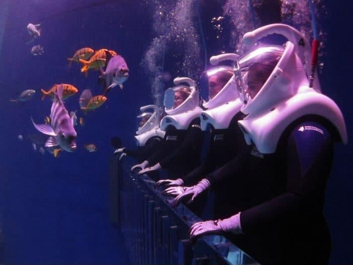 SeaTREK Experience at Mississippi Aquarium
