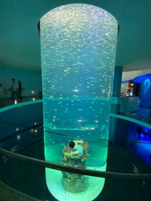 Swirl Habitat at Mississippi Aquarium